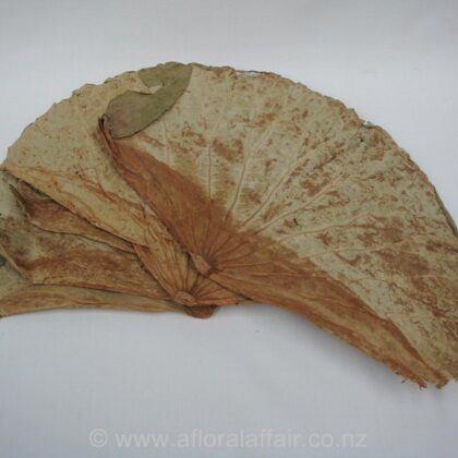 Lotus Leaves assorted Sizes approx 10pcs Wheat