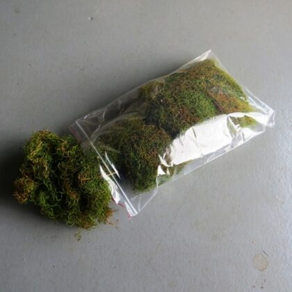Fresh Green Air Moss
