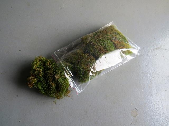 Fresh Plant Materials Moss etc