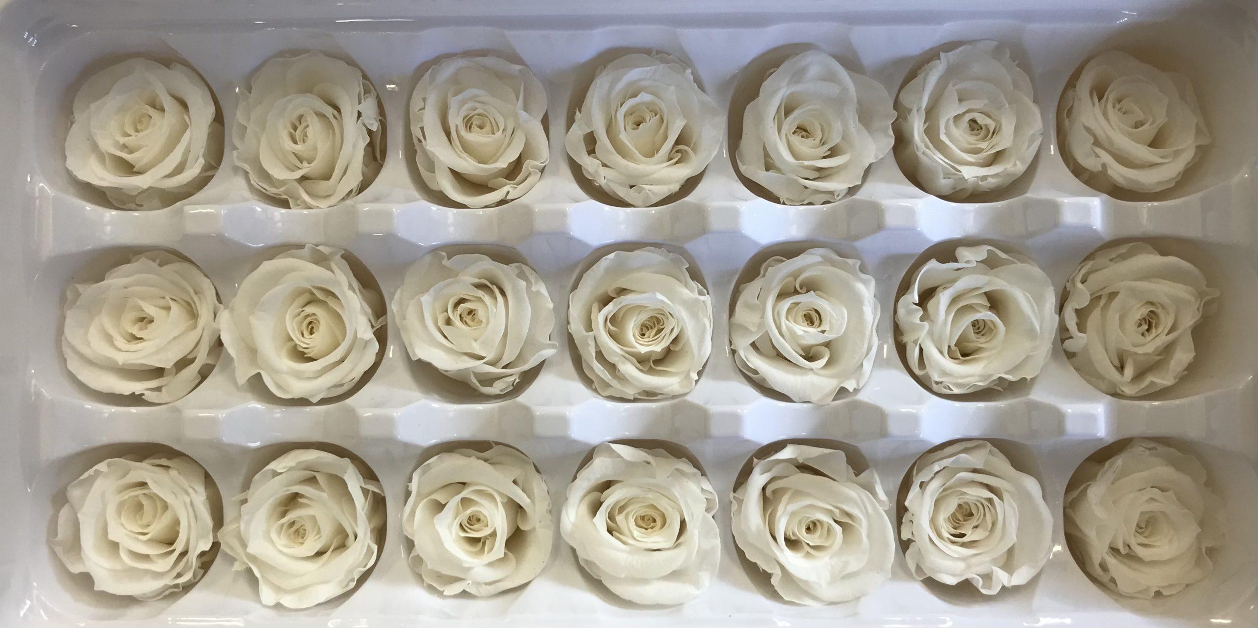 Preserved Spray Roses